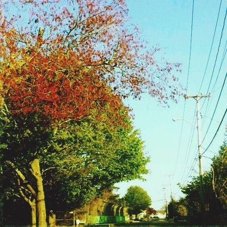 Newengland Beautiful Streetview Fall Fall Colors Showcase: November Scenery Beautiful Nature Outdoors Scenics Scenery Shots Simplyscenic