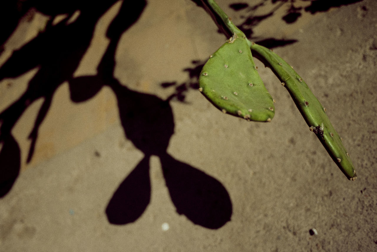 Animal Themes Close-up Day Green Color High Angle View Leaf Nature No People Outdoors Shadow