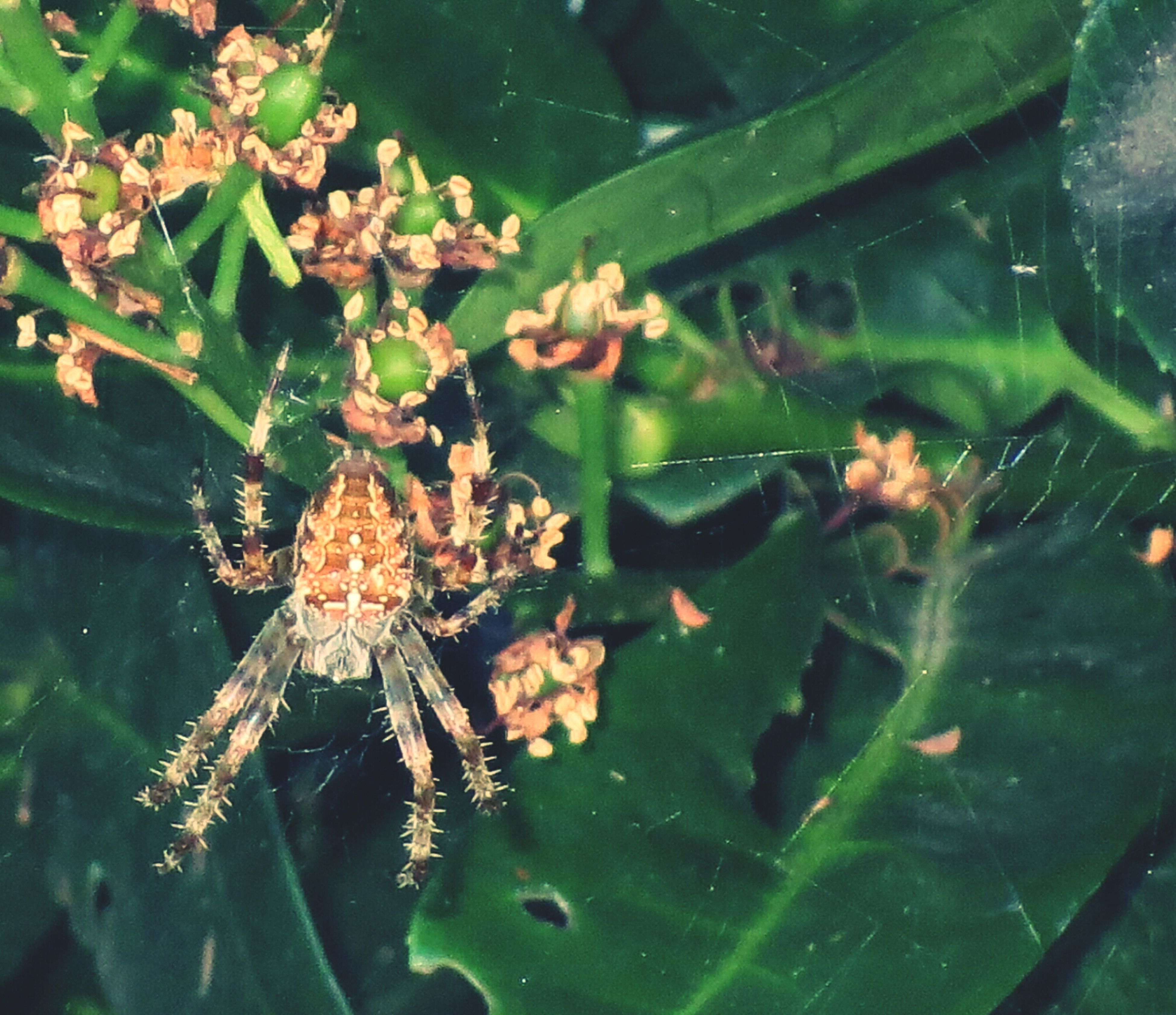leaf, water, plant, nature, green color, high angle view, growth, close-up, pond, leaves, fragility, wet, drop, beauty in nature, day, freshness, outdoors, animal themes, reflection, spider web