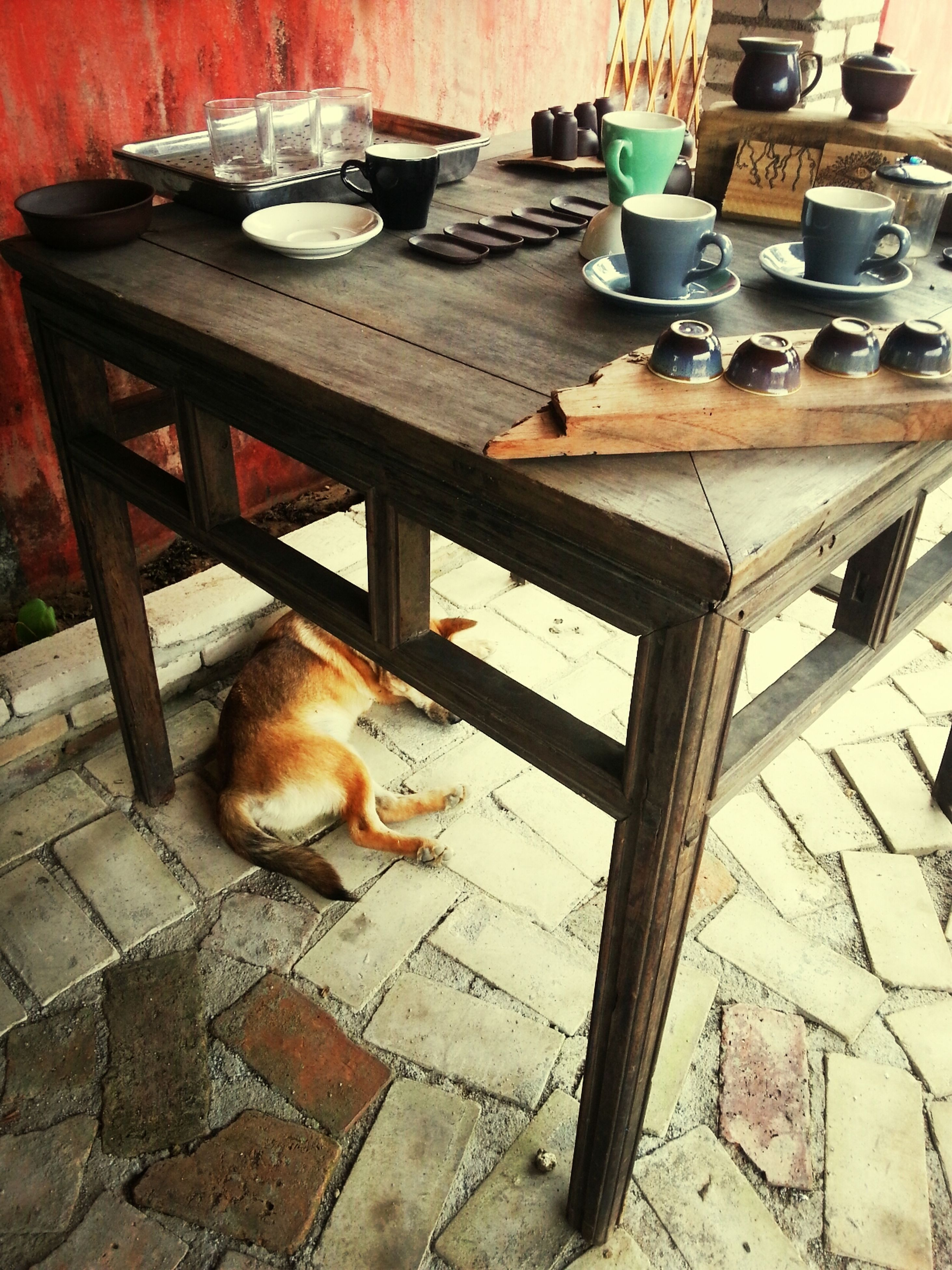 animal themes, one animal, domestic animals, pets, mammal, wood - material, indoors, high angle view, domestic cat, table, dog, cat, no people, built structure, sitting, abandoned, day, relaxation, chair, house