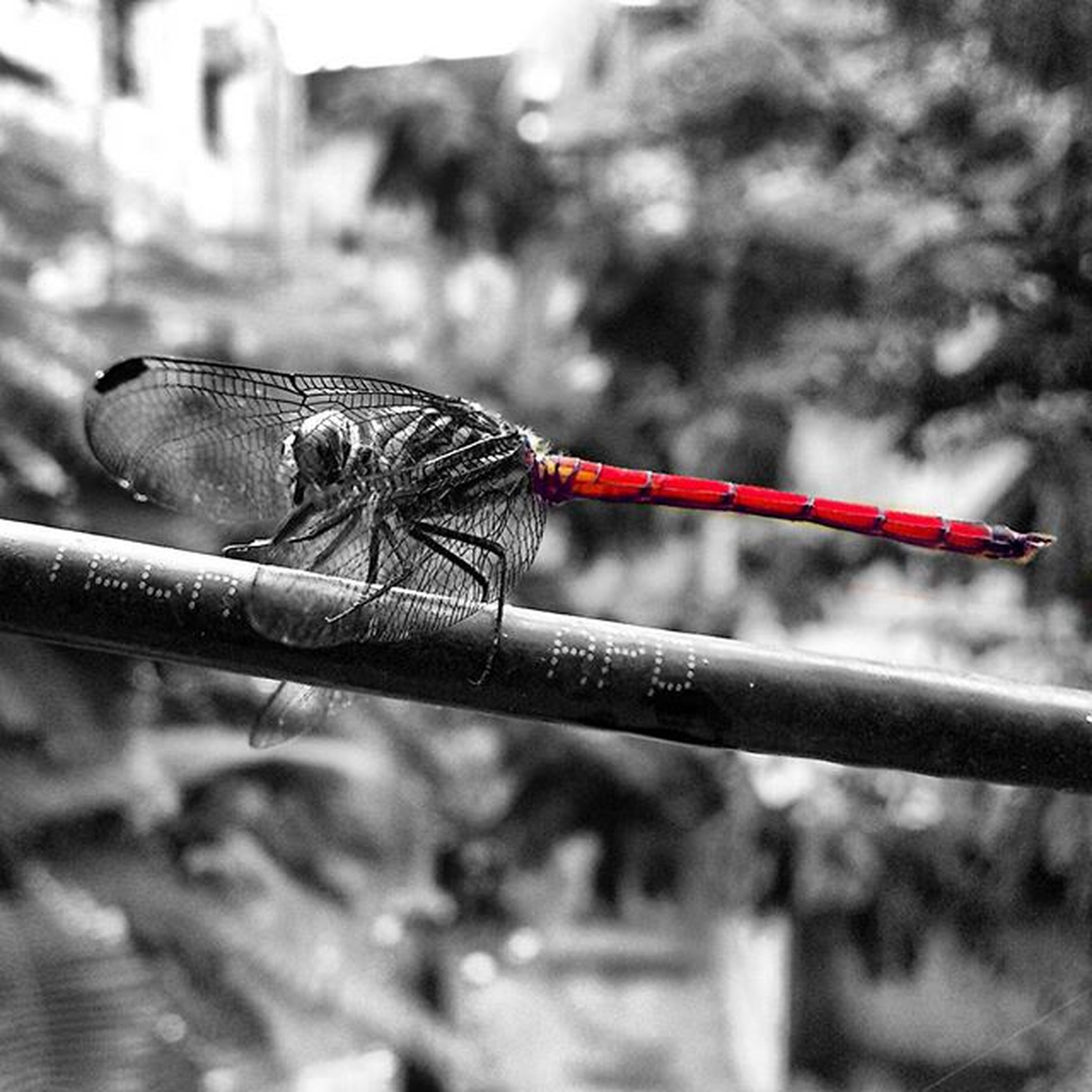 animal themes, one animal, animals in the wild, wildlife, focus on foreground, close-up, insect, perching, full length, bird, day, dragonfly, outdoors, side view, nature, no people, selective focus, animal wing, metal, animal antenna