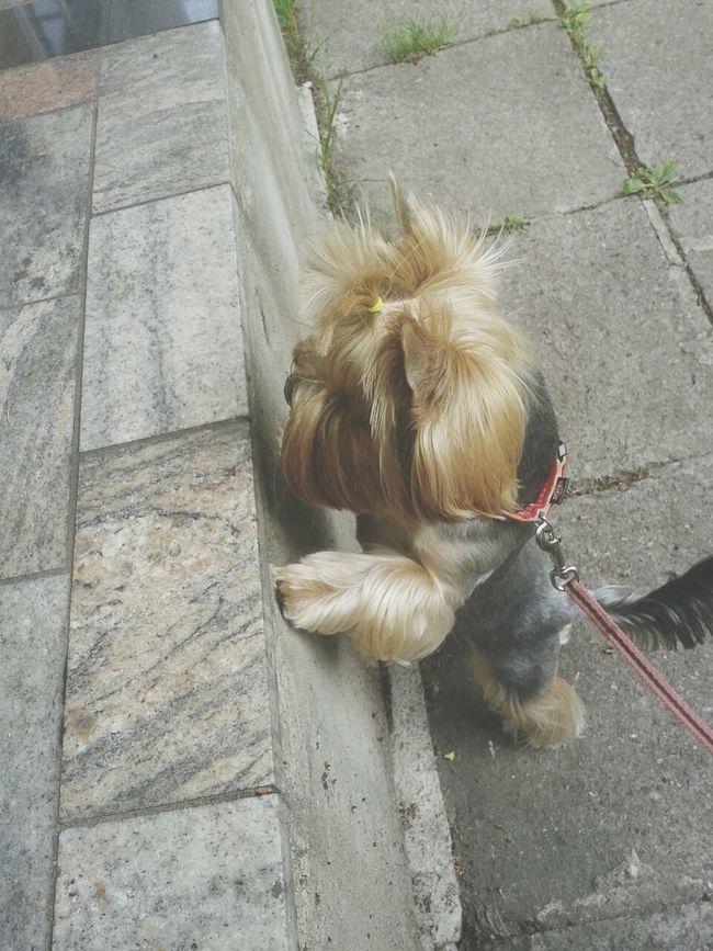 Chika :)