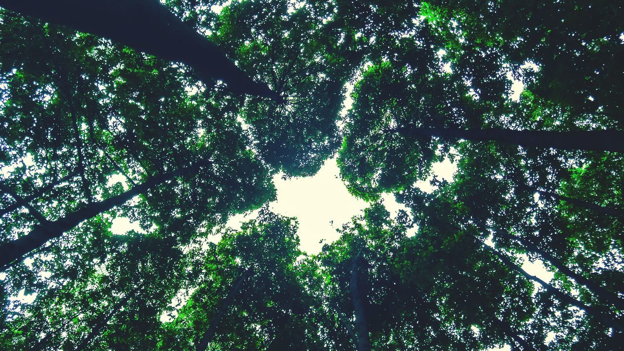 Green Color Tree Full Frame Backgrounds Silhouette No People Outdoors Nature Low Angle View Day Leaf Growth Branch Beauty In Nature Water Sky Close-up Neighborhood Map The Street Photographer - 2017 EyeEm Awards The Great Outdoors - 2017 EyeEm Awards EyeEmNewHere EyeEm LOST IN London EyeEm Selects