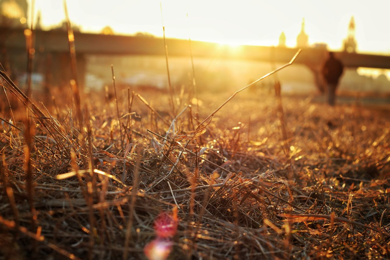 The City Light Sunset Nature Sunlight Grass Outdoors Day Freshness Close-up Happiness Glowing Canon760D City Betterlandscapes Light Effect Dresden Atmosphere Warm Beginning
