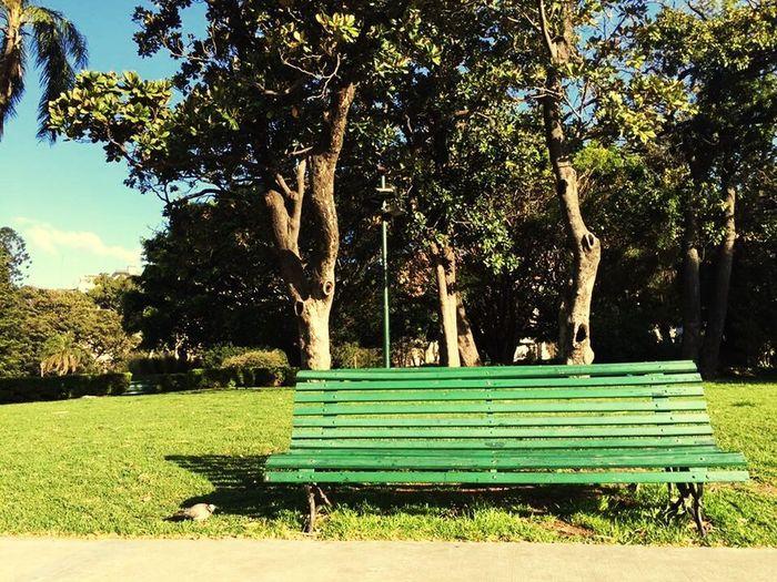ベンチ Bench Tree Green Color Grass Growth Park - Man Made Space Nature Shadow Tranquility Sunlight No People World WorldTrip World WorldTrip ForestGump Mission