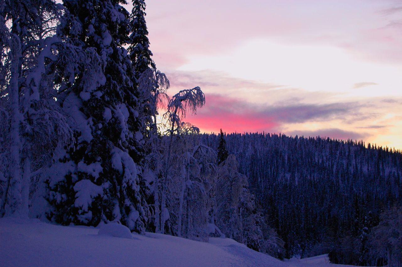 Lapland Finland Winter Wintertime Snow Winter Solstice Polar Night Nikon Nikonphotography Teamnikon Nikond70 Fell