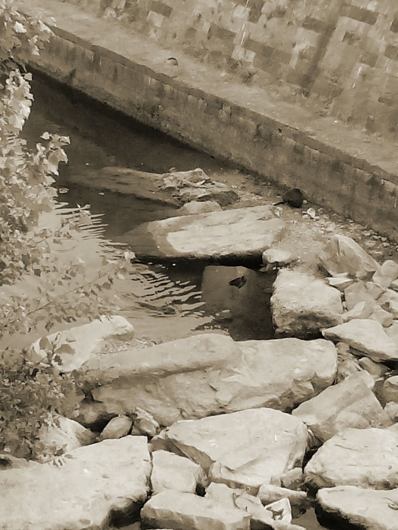 EyeEm Sepia Water And Nature Sepia_collection Naturephotography Sepia Photography Eyeemphotography EyeEm Sepia_Collection Rocks And Water Animals EyeEm Nature Lover Animal Themes Little River Water_collection Eye4photography  EyeEm Gallery Nature Sepiaphoto Eyeem Sepia Water Animal Photography Birds In Nature River Check This Out Rocks