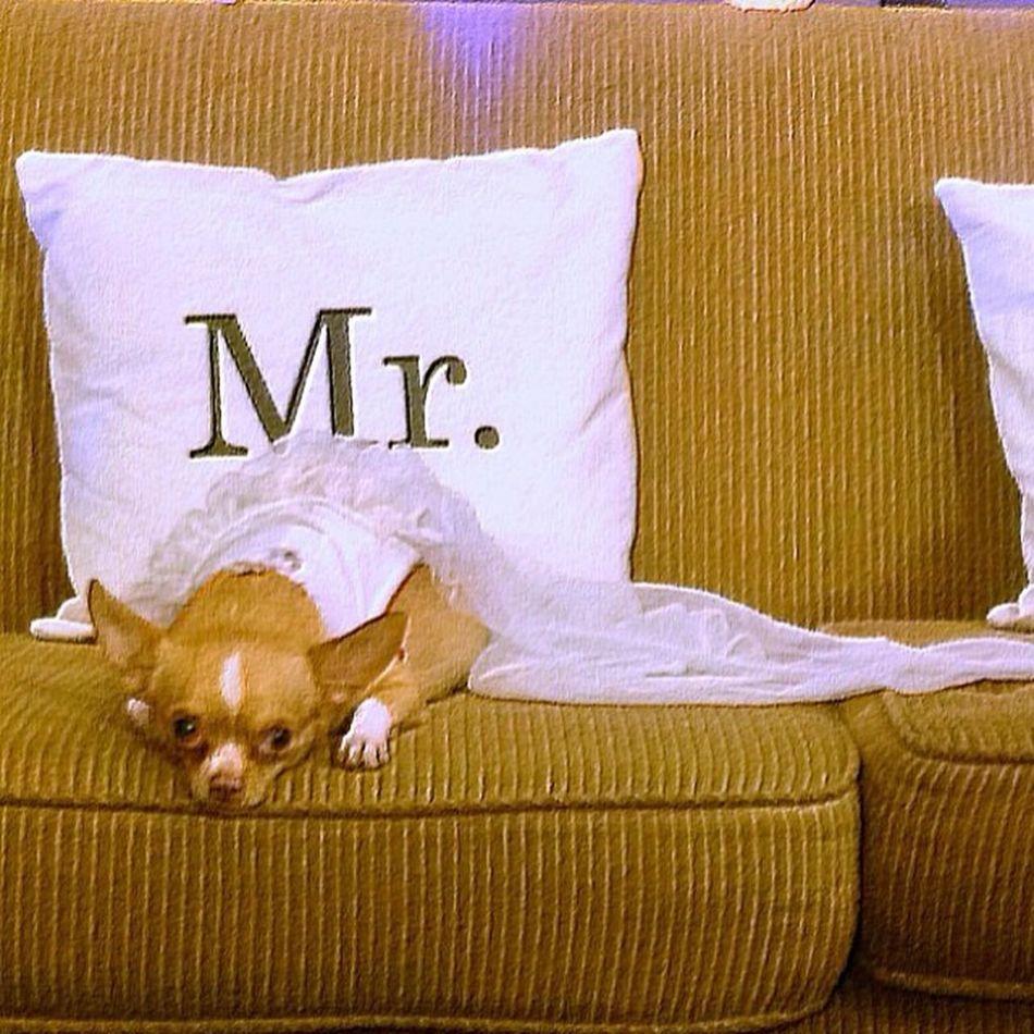 Cutie patootie.. ?Ramiljillnuptial Dog Cutiepatootie Preggydog