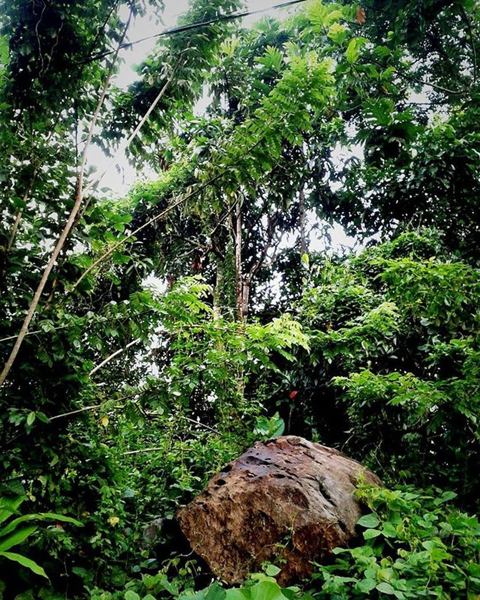 --> How does it feel to be the only rock amongst a grove of lush greenery? Naturelovers Nature Natureporn Natural NaturalBeauty Greenery Green Rock Landscape Tree Earthpix Earth Mothernature Plants Leaves Naturephoto Naturephotography Naturepics Instanature Instagood Instapic Instadaily Land NatureTherapy