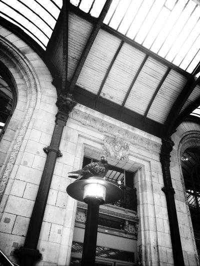 Getting bored Gare De Lyon Black & White Paris Pigeon