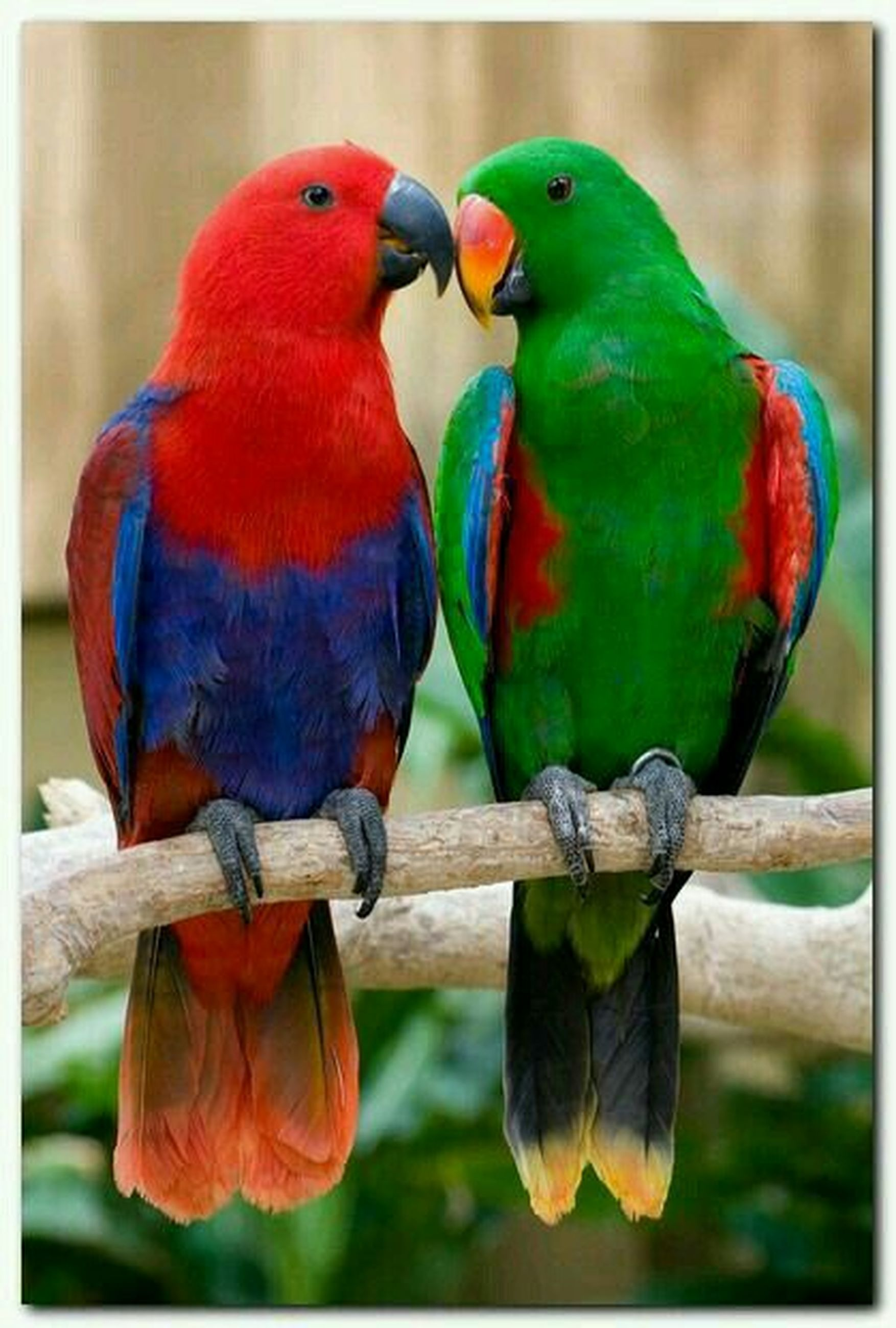bird, animal themes, parrot, animals in the wild, one animal, multi colored, wildlife, perching, beak, focus on foreground, close-up, blue, macaw, nature, branch, two animals, day, green color, full length, no people