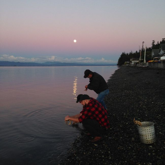 Cleaning Crabs Crabs Whidbey Island Dungeness Crab Northwest Moon Light Moon