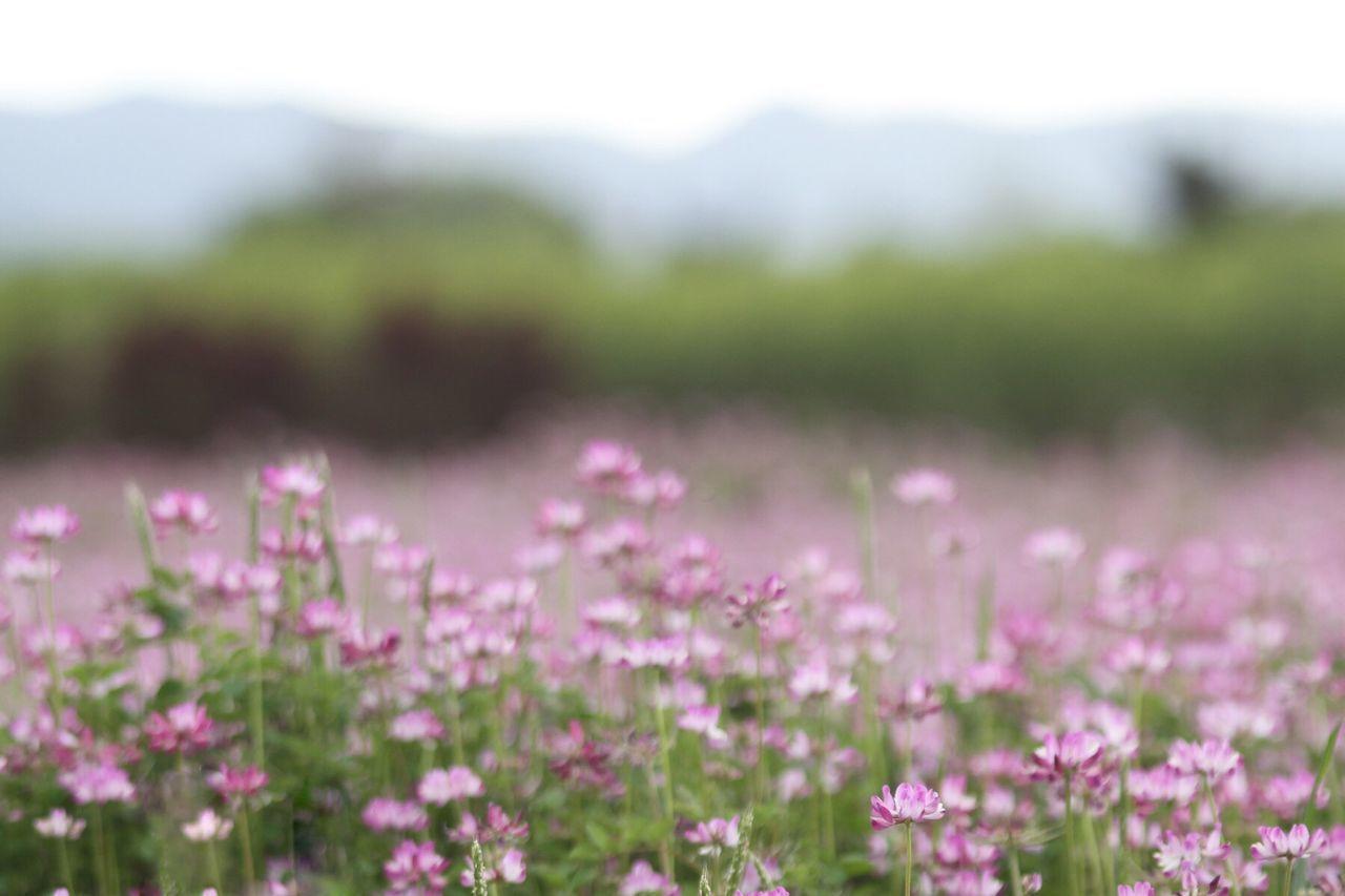 EyeEm Nature Lover Showcase: February EyeEm Japan 季節外れさーせん フィルターかけると迷うからスッピン Pastel Power