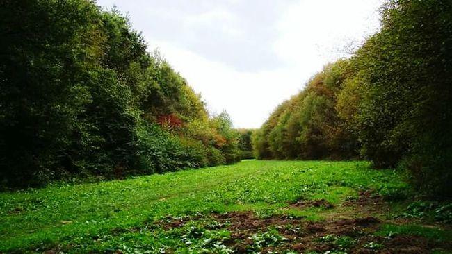 Wald der Jahres Bäume in Gut Leidenhausen