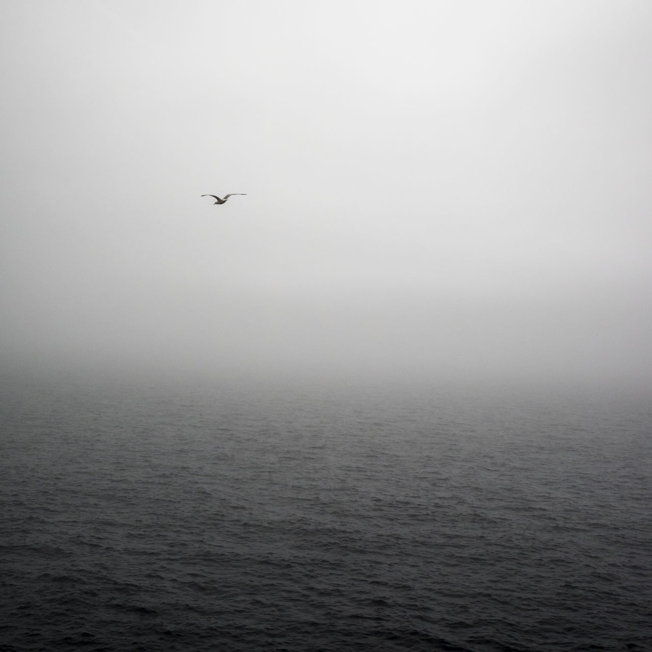 Flying Outdoors Nature Day No People Sky Water Bird Beauty In Nature Animal Themes Clean Lake Ocean Sea Sea And Sky Fog Mist Landscape Seascape The Great Outdoors - 2017 EyeEm Awards