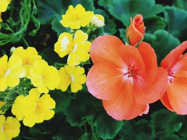 Floral Flower Plant Petal Nature Flower Head Close-up Growth Beauty In Nature Day Blossom Yellow Multi Colored Fragility Outdoors Freshness No People EyeEmNewHere