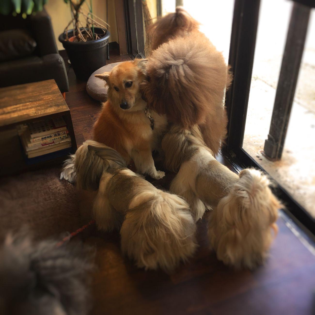 Pets Dogs Pet DogLove Dog Love Happy Dog I Love My Dog My Dog Cute Pets Dog
