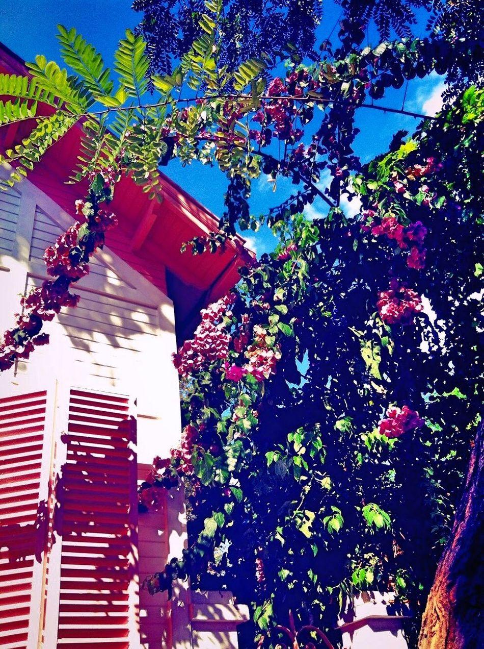 Istanbul Büyükada Büyükada Bestoftheday Bestvacations House Pink Pink Flower