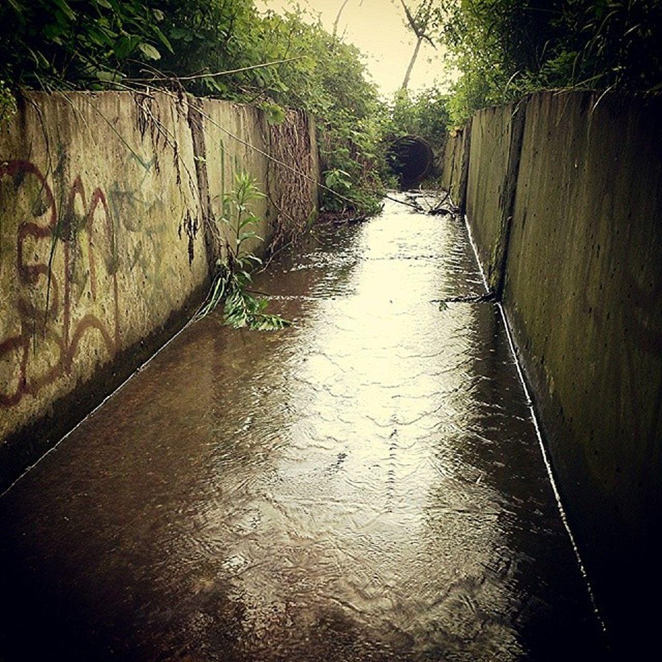 В раскоряку сырец Дождь Syrets Rain