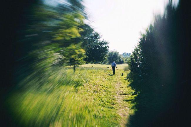 Walking on a Dream - VSCO Vscocam Park Walking Around