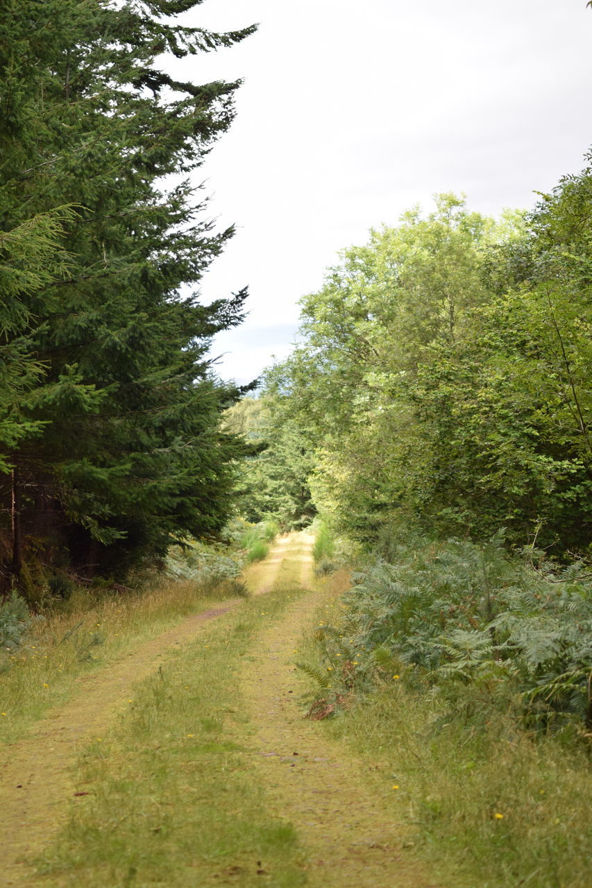 the way forward, nature, landscape, tree, road, grass, plant, no people, day, outdoors
