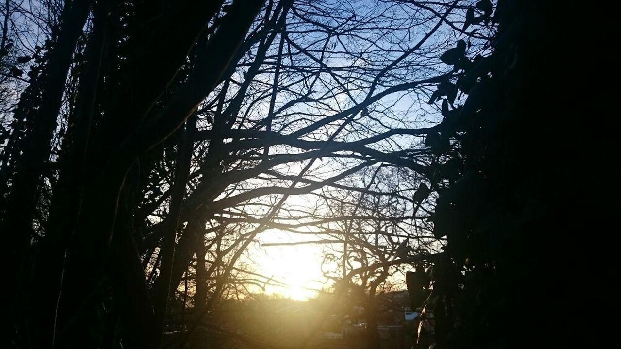 Catching the sun.... Tree Silhouette Sunset Nature Outdoors No People Dusk Bare Tree Tunnel Vision Branch