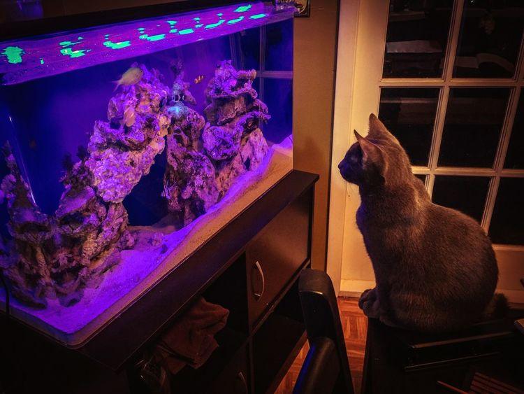 Kitty Cat My Reef Tank Russian Blue Saltwatertank Mesmerized Interior Views