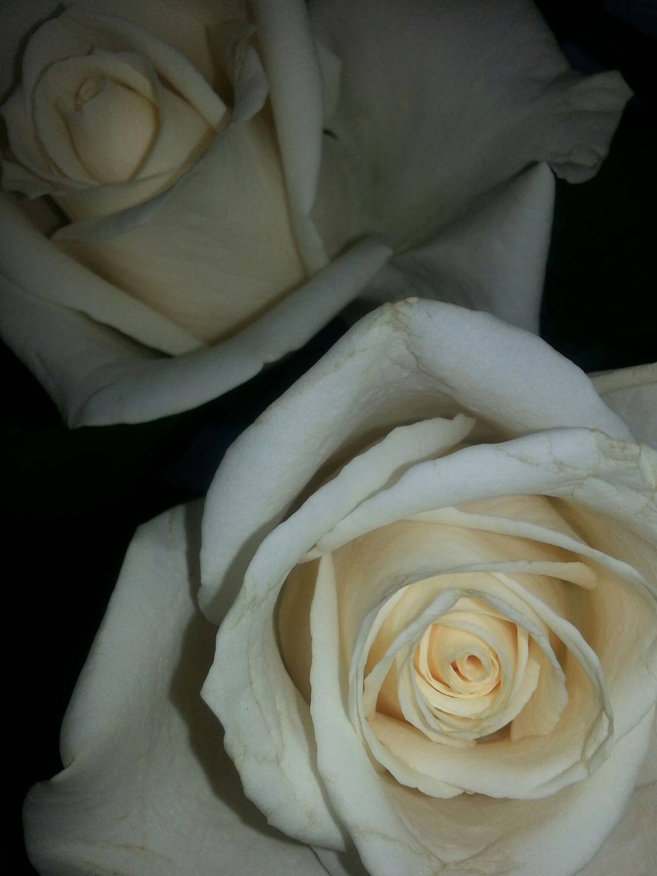Aloha. Roses for Mommy Aliamanu Hawai'i
