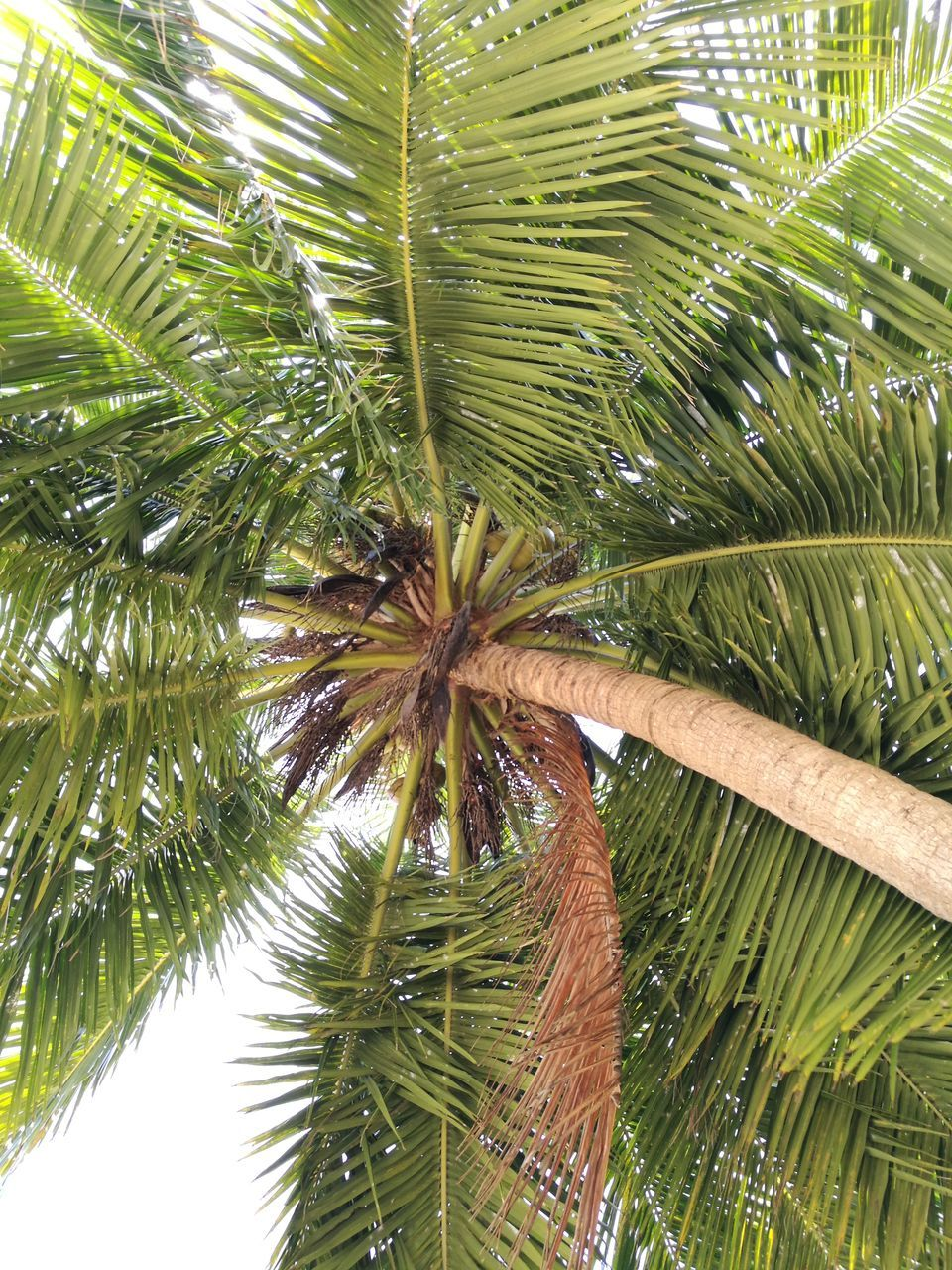 green color, palm tree, growth, nature, day, no people, leaf, beauty in nature, tree, outdoors, freshness, close-up