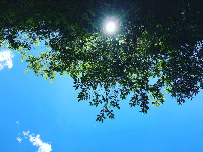 空 Hi! Enjoying Life Happy 癒し Enjoy 緑 Sky Sun Forest 絶景 風景 EyeEm EyeEm Best Shots