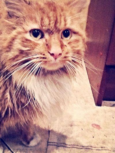 My cat???