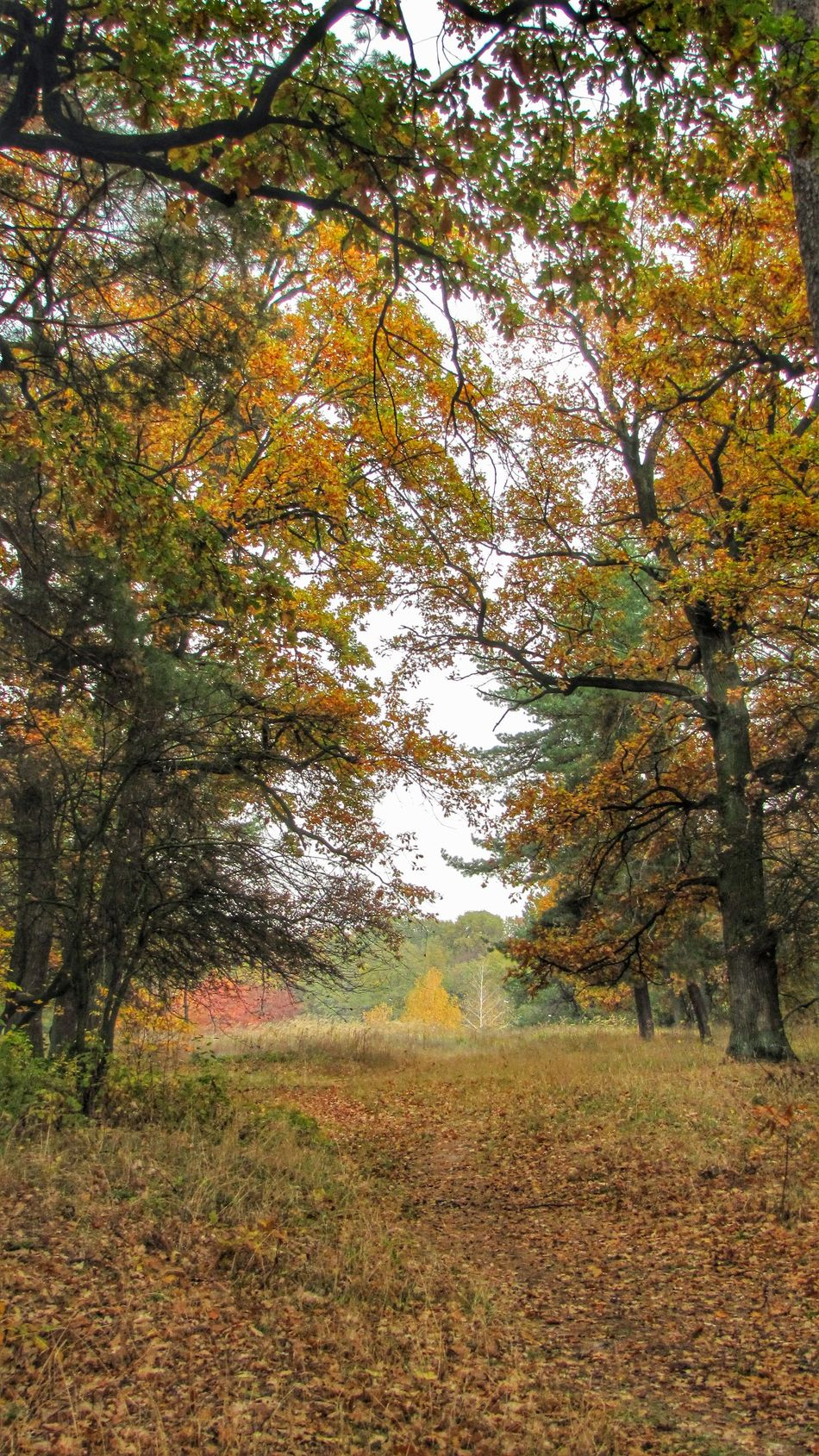 Осенний ноктюрн Colors Of Autumn Landscape Nature_collection