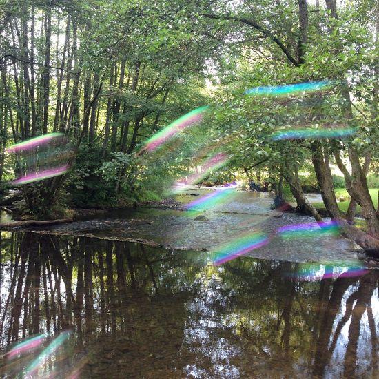 Soap fun&art Multi Colored Forest Nature Art Soap Bubbles