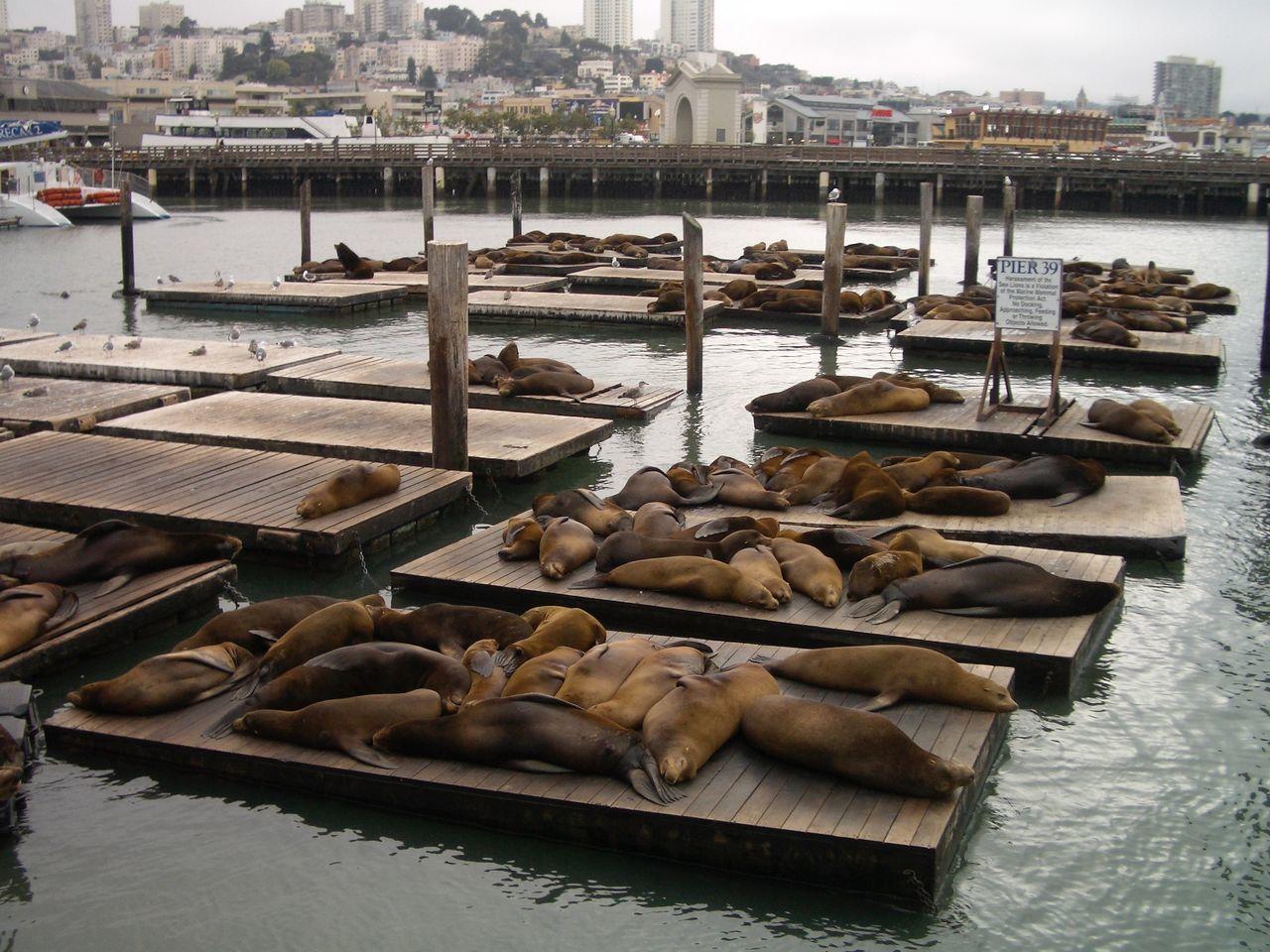Beautiful stock photos of san francisco, Animal Themes, Animal Wildlife, Animals In The Wild, Bay Of Water