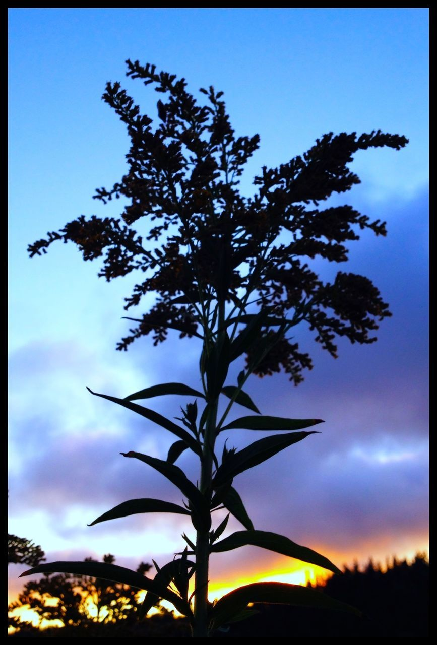 Silhouette plant against sky at sunset