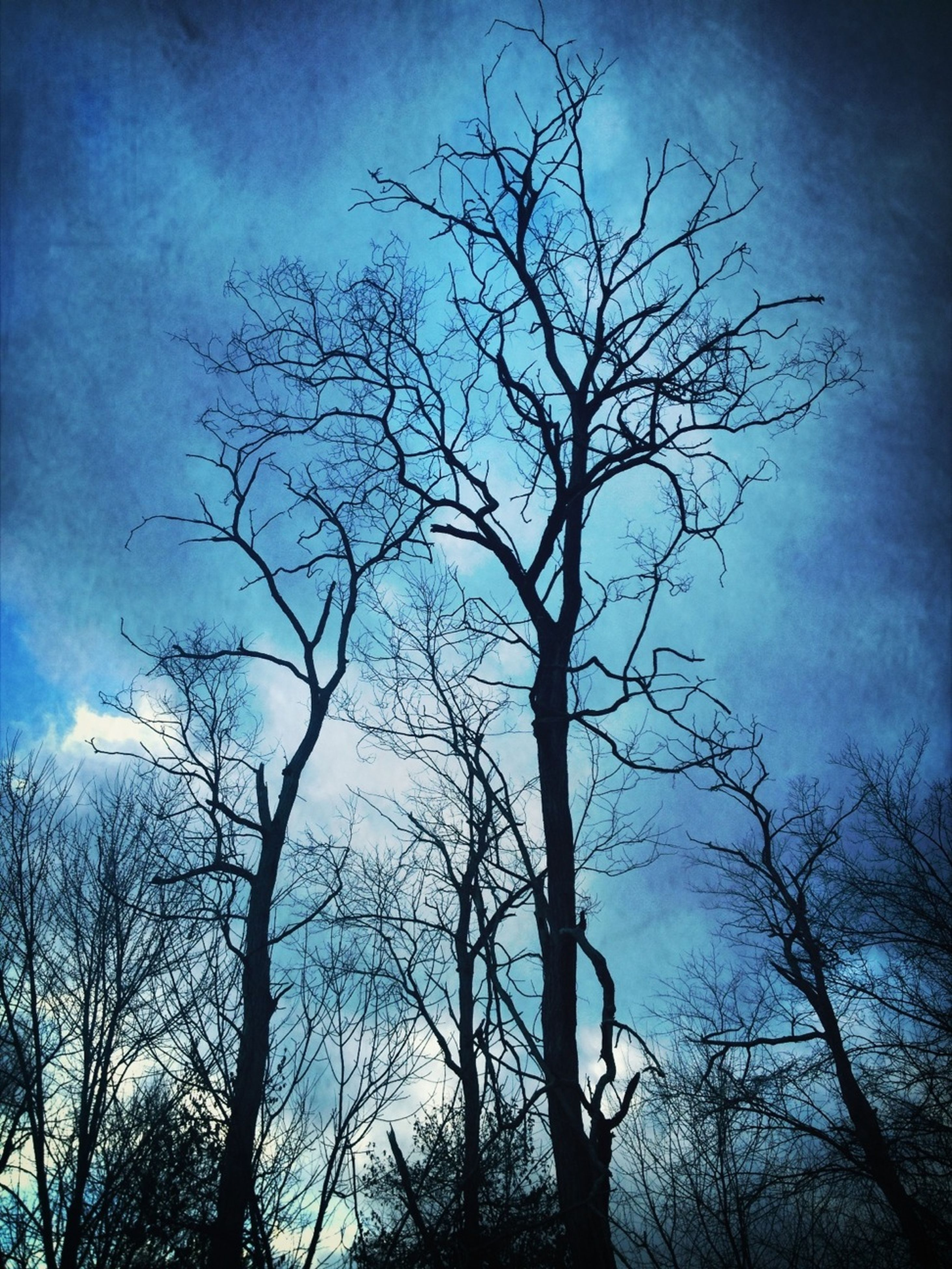 bare tree, tree, low angle view, branch, sky, silhouette, tranquility, nature, beauty in nature, cloud - sky, scenics, tranquil scene, dusk, tree trunk, cloud, outdoors, blue, no people, dead plant, cloudy