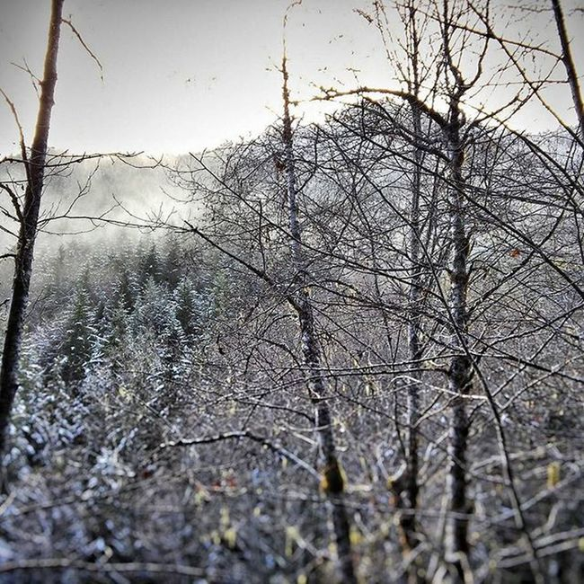 Found some snow up here! Glad to see it! Upperleftusa Olympicnationalpark Optoutside Snow Forest Winterisheretostay