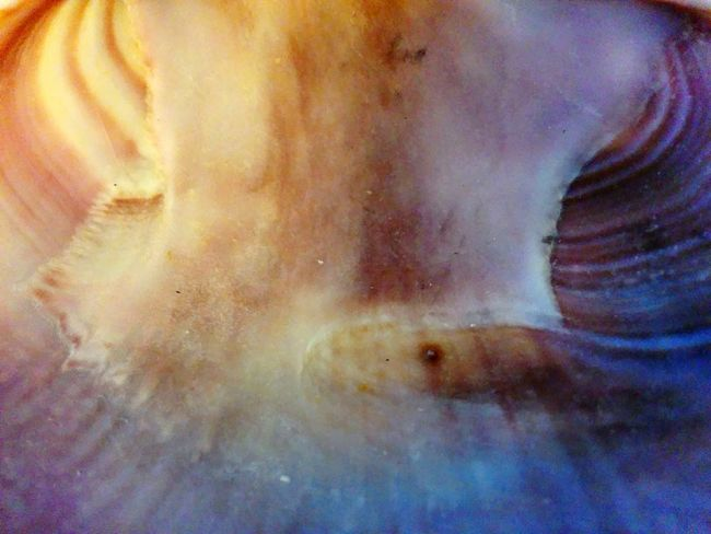 She sells seashells by the seashore Shiny Close-up Maximum Closeness Inside A Shell Seashell Ocean Beauty In Nature Cockleshell Ethereal Beach Eyeem Marketplace Colors Gritty Sand