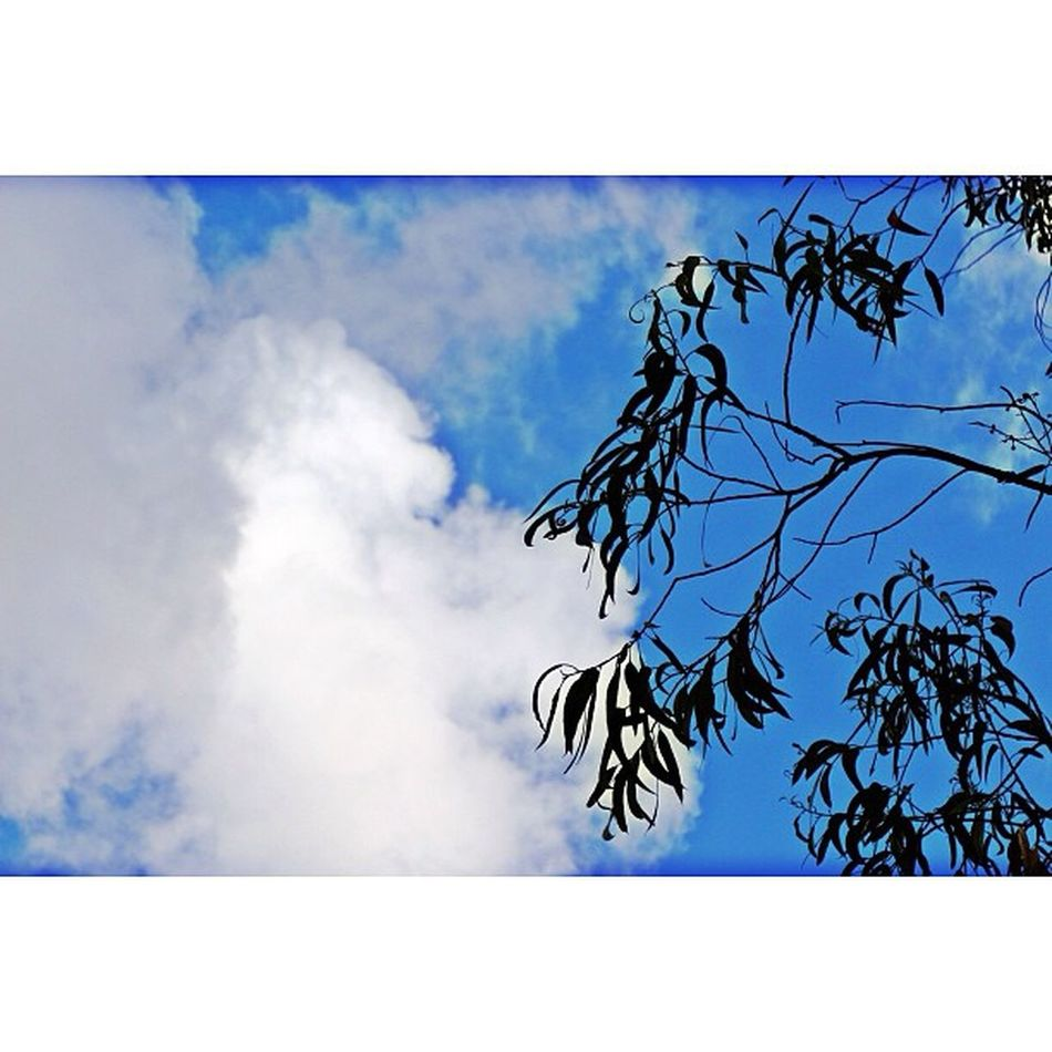 #igers #mira #igmasters #ig_captures #ig_portugal #cantanhede #igersportugal #portugal #portugaligers #portugal_lovers #portugal_em_fotos #portugaloteuolhar #portugaldenorteasul #iphone5 #iphonesia #iphoneonly #canon #eos650 #instagood #instagram #instago Iphonegraphy Fotoencantada Portugaligers Clouds Igersportugal Portugaldenorteasul Canon Cantanhede Portugal Igmasters Iphoneonly Ig_captures Iphonesia Portugaloteuolhar Instagram Eos650 IPhone5 Portugal_lovers Mira Portugal_em_fotos Instamood Jornalistasdeimagens Igers Instagramers Instagood Ig_portugal Instagramhub Chiquesnourtemo
