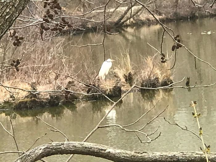 Water Nature Reflection No People Lake Sunlight Animals In The Wild Outdoors Plant Grass Bird Growth Forest Tranquility Beauty In Nature Branch Tree Day Scenics Animal Themes