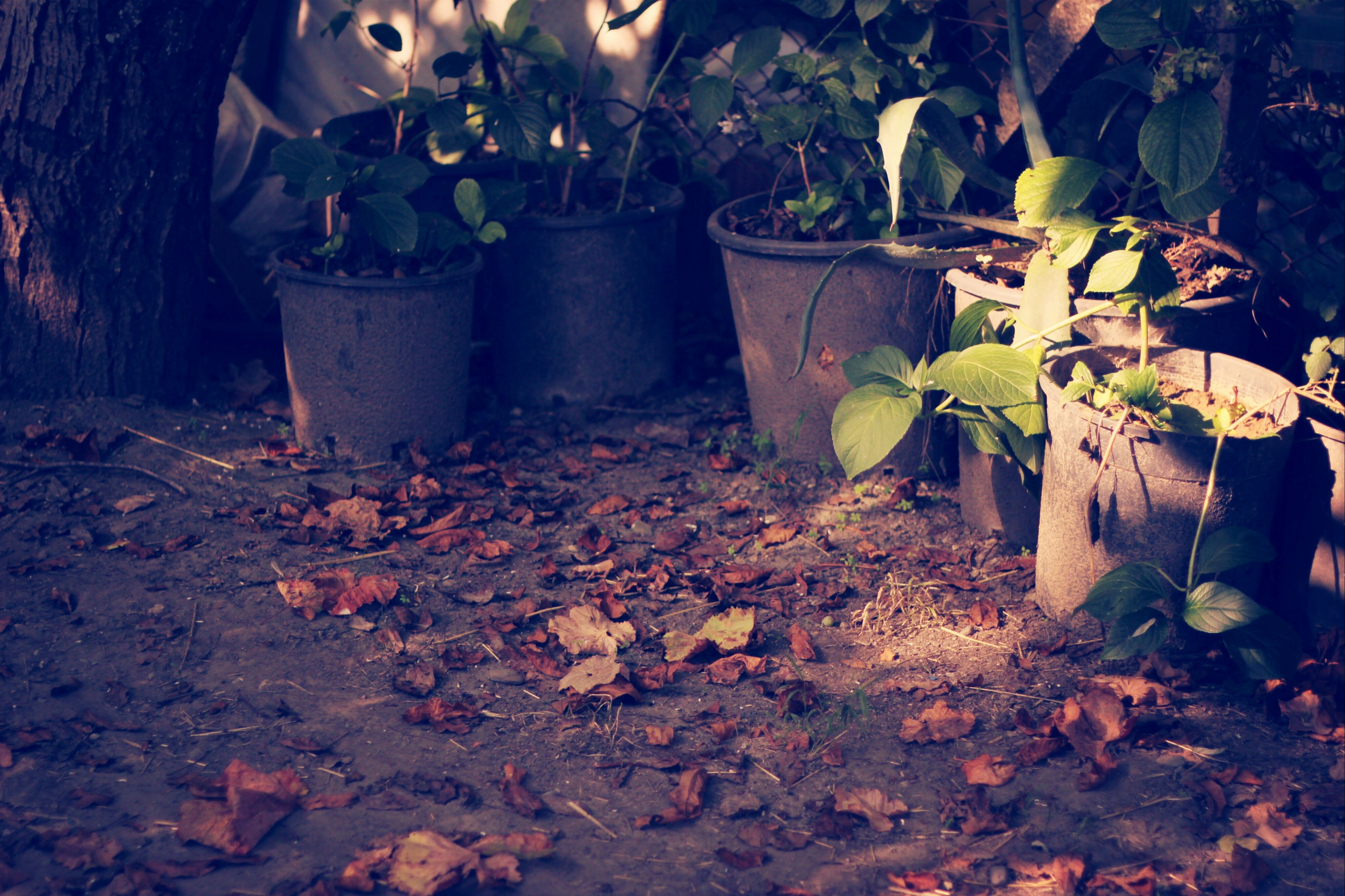 leaf, plant, growth, nature, fallen, leaves, front or back yard, potted plant, dry, autumn, outdoors, no people, day, tree, messy, sunlight, tree trunk, change, built structure, wood - material