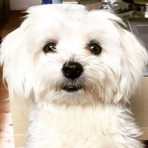 My Friends dog Shanti ❤️ Dog Pets White Color Close-up