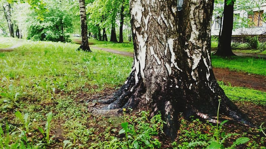 Forest Sankt-Petersburg Tree Magic Place ☀️ Rainy Day Spring 2016 Photo For Happy The Great Outdoors - 2016 EyeEm Awards
