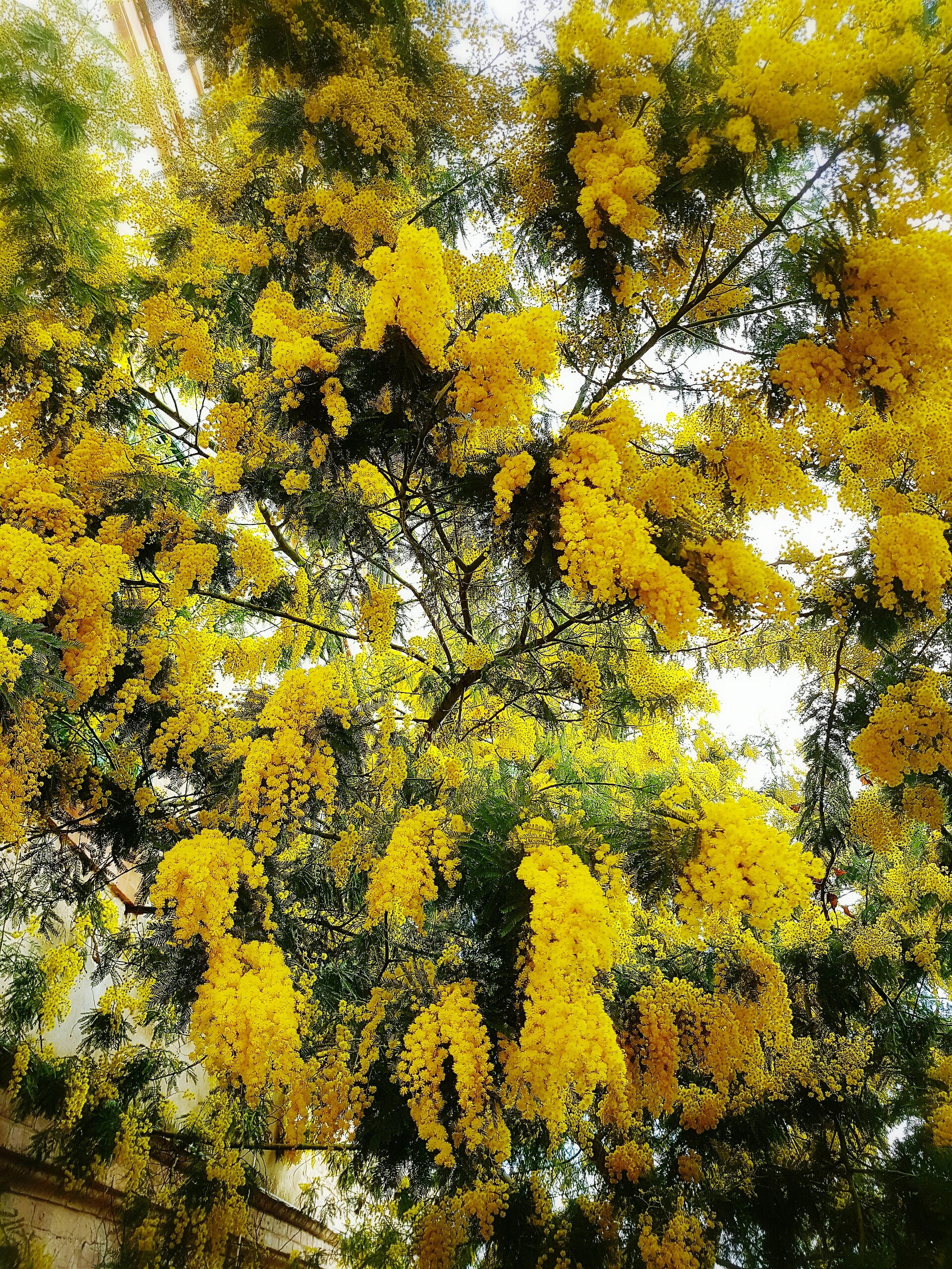 backgrounds, full frame, no people, yellow, nature, close-up, abstract, outdoors, tree, day, beauty in nature, sky
