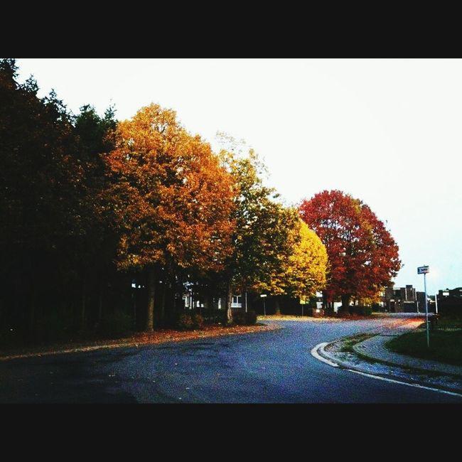 Lifemustgoon Lifeisshort Butitcanalwayschange Seasonchange 🌳🍁🍃 Lifeisacırcle LetsDoIt Enjoing Life