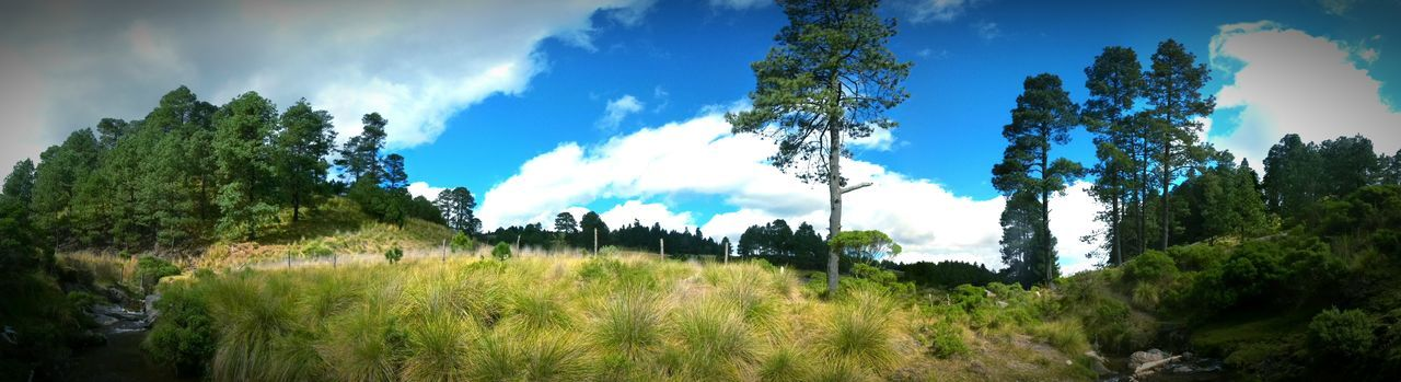 Bosque bluesky outdoor Tree Sky Growth Nature Cloud - Sky Grass Plant Landscape Outdoors No People Day