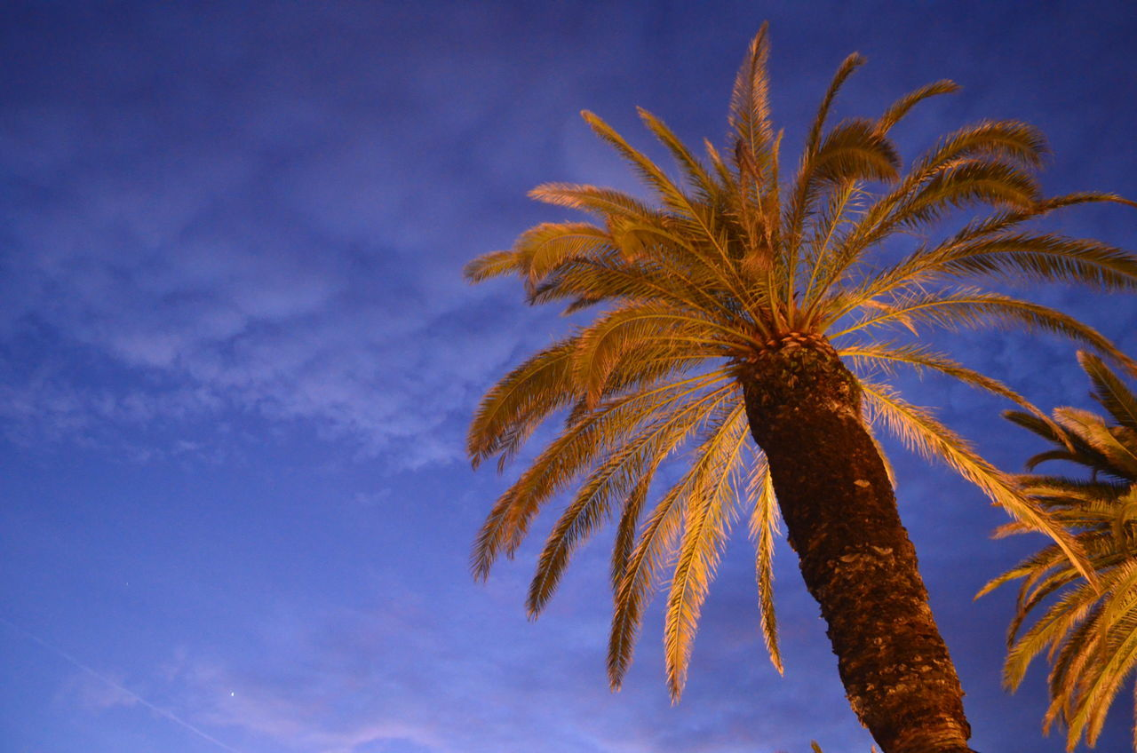 Palm Tree Sky Blue Tree Low Angle View No People Nature Outdoors Scenics Beauty In Nature