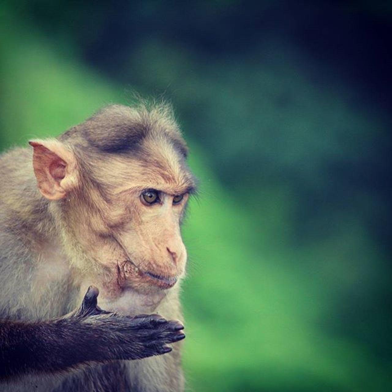 Monkey Wildlifephotography Nature Photography Nature Sandypics90 FUNNY ANIMALS Funny Du_kya