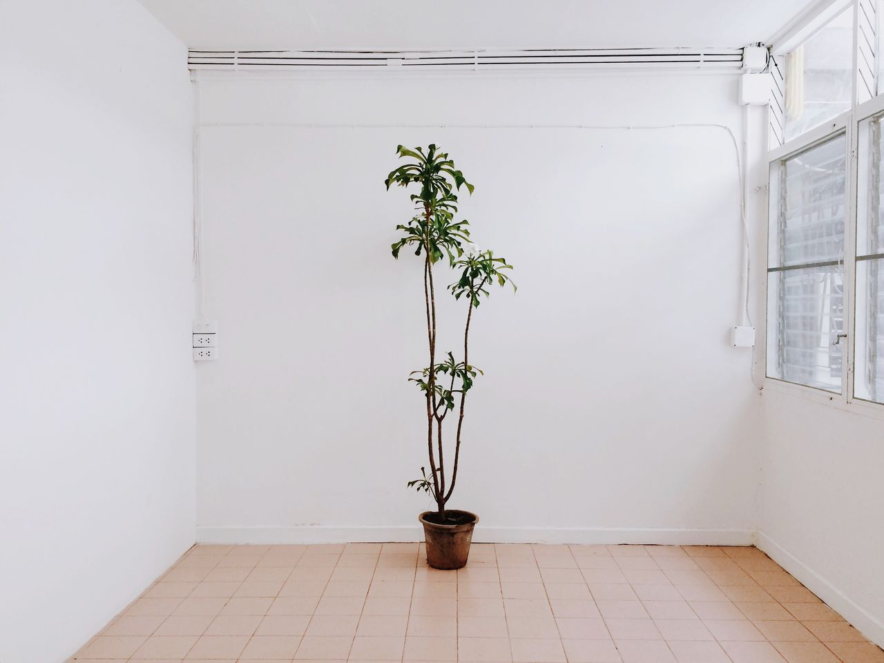 White White Background Plant Tree Indoors  Quirky Plants