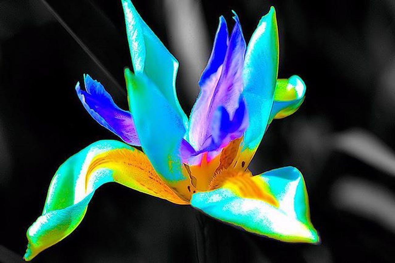 Iris flower The word Iris means rainbow. splash... splash... 1) Summertime_mega_challenge 2) Tgif_colorsplash 3) Pocket_colorsplash 4) Loves_colorsplash 5) Igpowersplash 6) Greatsplash 7) Splash_bnw 8) Bnwsplash_flair 9) Splash_greece 0) Colorsplash_fun 1) Colorsplash_legends 2) Tv_colorsplash 3) Mysplashedits 4) Splashmood 5) Splashmasters_family 6) Rsa_macro 7) Electric_macro 8) Macroworld_tr 9) Best_expression_splash 0) Colorsplash_captures 1) Passion_for_splashing 2) Macroclique 3) Pocket_colorsplash 4) Ig_splash 5) Cool_splashes 6) macro_mood 7) macro_holic 8) rsa_bnw_splashbex 9) splash_oftheworld 0) bnwsplash_kings